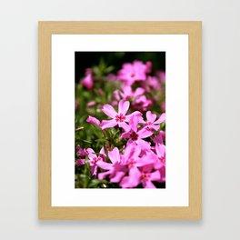Spring Time Flowers Framed Art Print