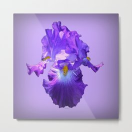 Decorative Lilac Bearded Iris Flower Metal Print