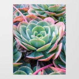 Succulent Garden Vibrant Pastel Poster