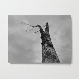 070 | bastrop state park Metal Print