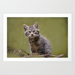 Scottish Wildcat Kitten Art Print