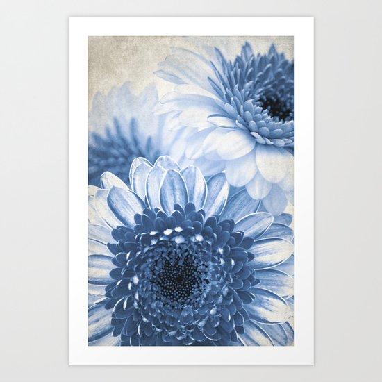 Blue Gerbera  Art Print