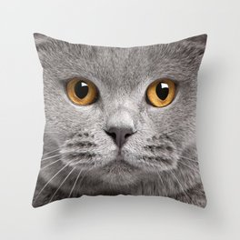 Cat in Grey Throw Pillow