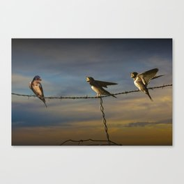 Barn Swallows on Barbwire Fence at Sunset Canvas Print