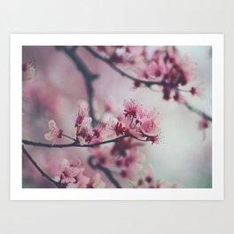 Pink Cherry Blossom On Branch Art Print