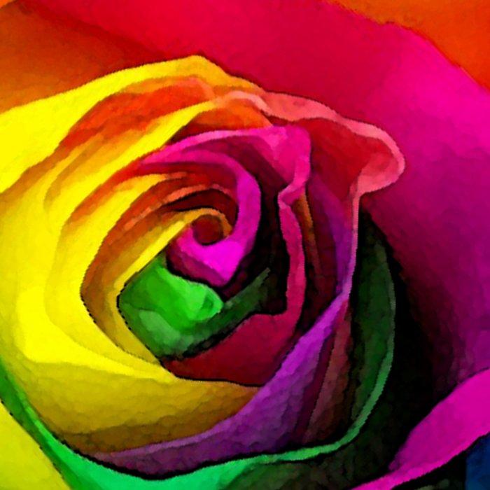 Rainbow Rose Colourful Background Leggings
