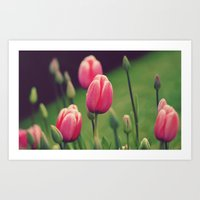 Row of Tulips  Art Print