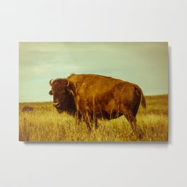 Vintage Bison - Buffalo on the Oklahoma Prairie Metal Print