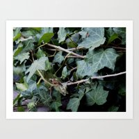 ivy that was green with envy Art Print