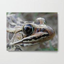 Frog Eyed Metal Print