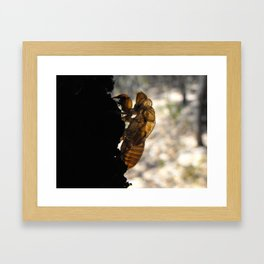 Cicada Ghost Framed Art Print