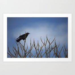 Winter Crow in Tree Art Print