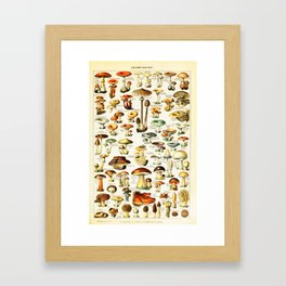Vintage Edible Mushroom Chart by Adolphe Millot Framed Art Print