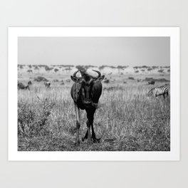 Wildebeest in Maasai Mara Art Print