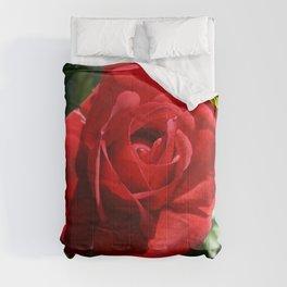 Beautiful Climbing Red Rose Close Up Photograph Comforters