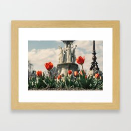 Tulips in front of a fountain. Framed Art Print