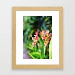 Mini Bird of Paradise Framed Art Print