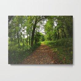 Crab Tree Falls Trail - NC Metal Print