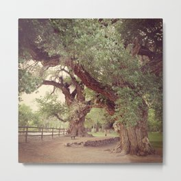 Mighty Cottonwood Trees Metal Print