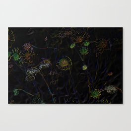 Little Daisies Of The Desert in Neon Canvas Print