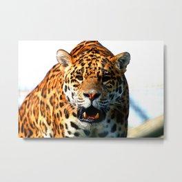 Jaguar Roar Metal Print