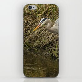 Great Blue Heron By the Water's Edge iPhone Skin