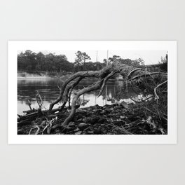 Root Branches Art Print