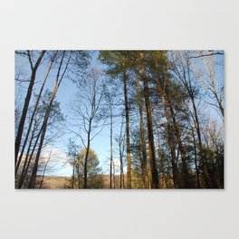 Wind Through The Trees Canvas Print