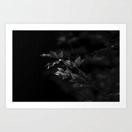 Leaves + Light Art Print