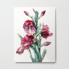 Flowering cactus Metal Print