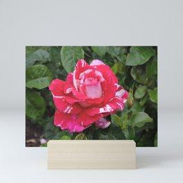 """A Rose Named """"Neil Diamond"""" Mini Art Print"""