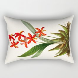 Epidendrum Selenium Vintage Scientific Botanical Flower Illustration Hand Drawn Art Rectangular Pillow