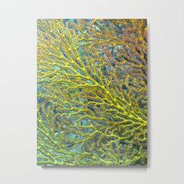 Yellow coral Metal Print