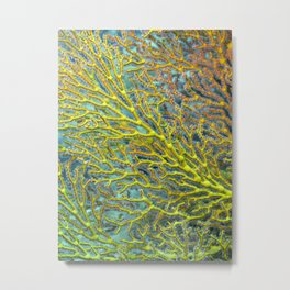 Yellow coral Metal Print