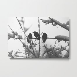 Three Black Birds on Snow Covered Branch Black and White Photography Metal Print