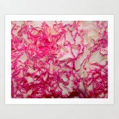 Carnation close up Art Print