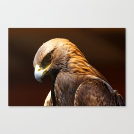 Golden Eagle | Eagles | Eagle Photography | Wildife Photography Canvas Print