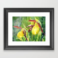 Yellow Lady Slippers Framed Art Print