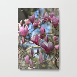 Magnolia Perspective Metal Print