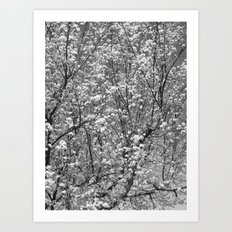 Places in Black & White: Plum Tree 11 Art Print