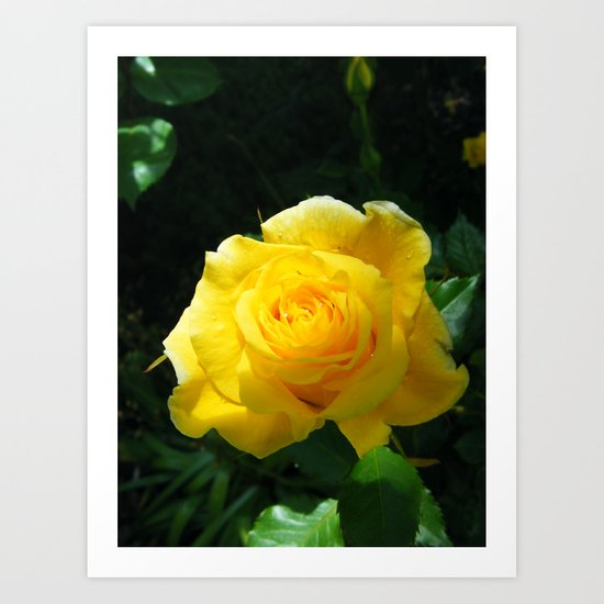 Perfect Yellow Flower Art Print