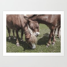 Pony and Baby Horse | Farmwife Art Print