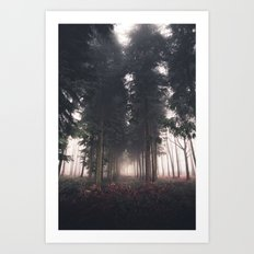 Forests Fog Art Print
