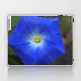 Blue, Heavenly Blue morning glory Laptop & iPad Skin