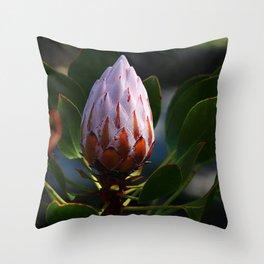Sugarbush - Protea Throw Pillow