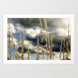 Oregon Gold Art Print