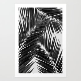 Palm Leaf Black & White III Art Print