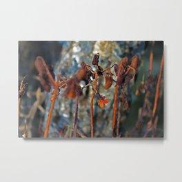 Flowers for algernon Metal Print