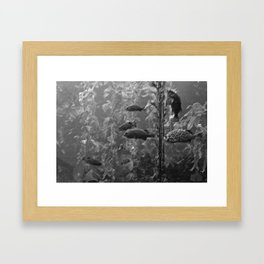 fish charcoal Framed Art Print