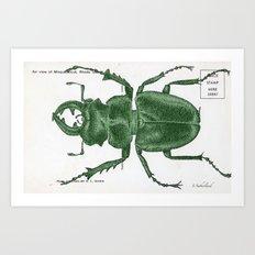 Green Beetle Postcard Art Print